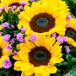 7 Reasons Why Flowers Make The Best Gifts