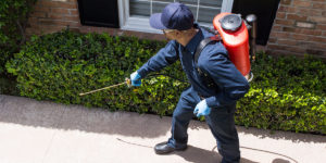 3 Tips For Keeping Pests Out Of Your Home